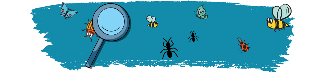 zoominonbugs